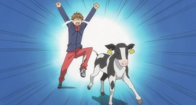 Silver Spoon Anime Image Gallery:Yugo Chasing a Calf in the Silver Spoon Anime