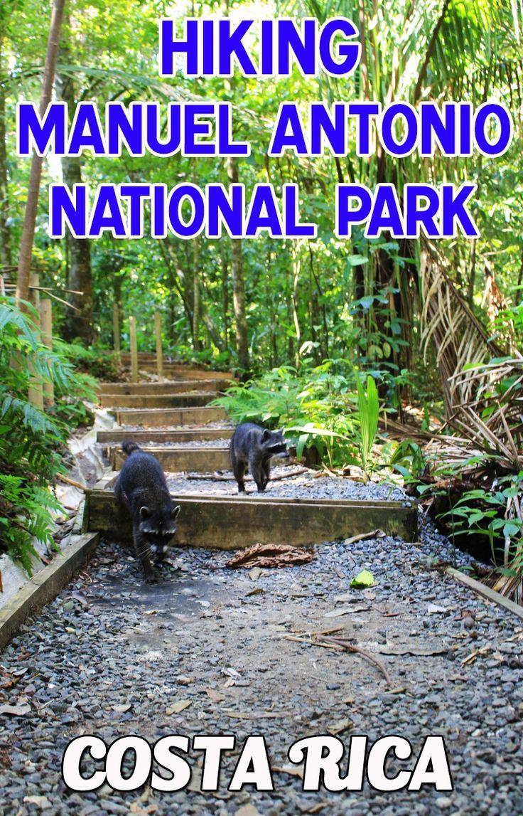 The complete guide to hiking Manuel Antonio National Park. Read about the different hikes, the viewpoints, beaches and tips for hiking the trails http://mytanfeet.com/activities/hiking-at-manuel-antonio-national-park/
