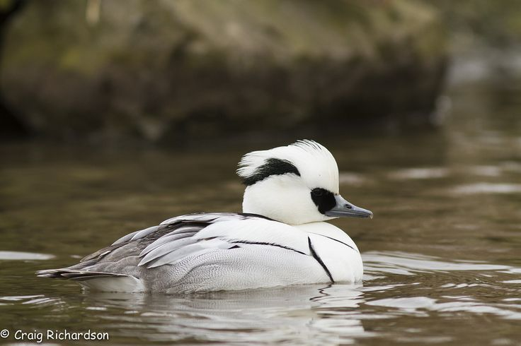 Photographed at Slimbridge