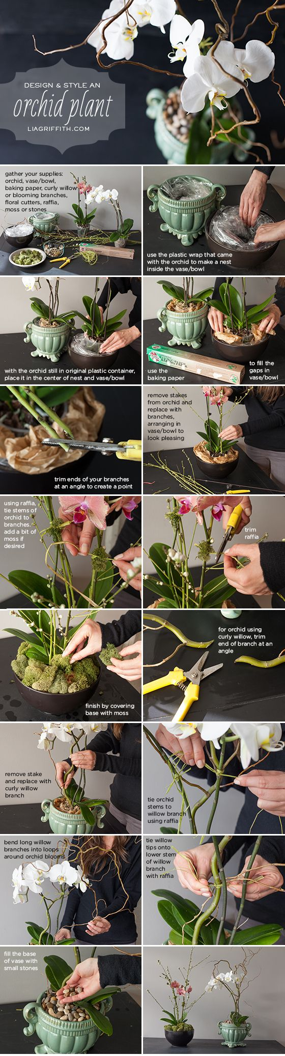 "Use this easy step-by-step tutorial to style a grocery store orchid into a floral shop design. ""Repinned by Keva xo""."