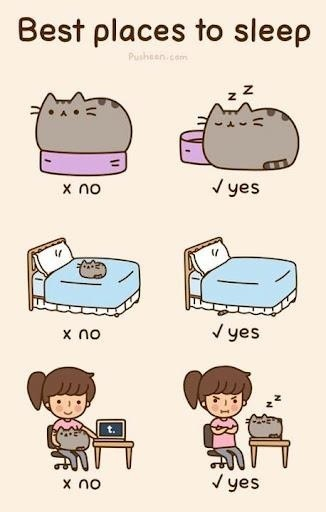 Best places to sleep - Pusheen Cat
