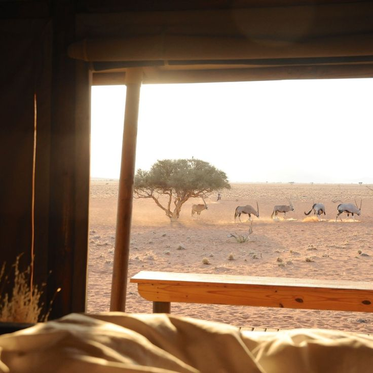 Sunrise (Wolwedans Private Camp, NamibRand Nature Reserve, Namibia)