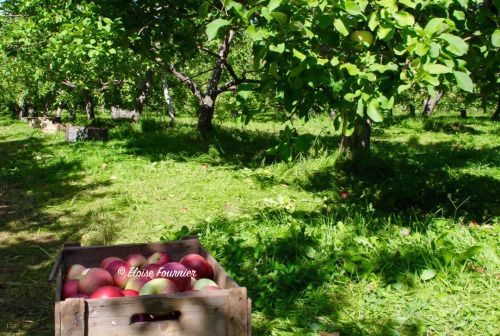 An Afternoon at the Orchard Labonté Orchard, Ile-Perrot, QC September 2015