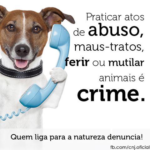 MAUS TRATOS AOS ANIMAIS É CRIME!!!!