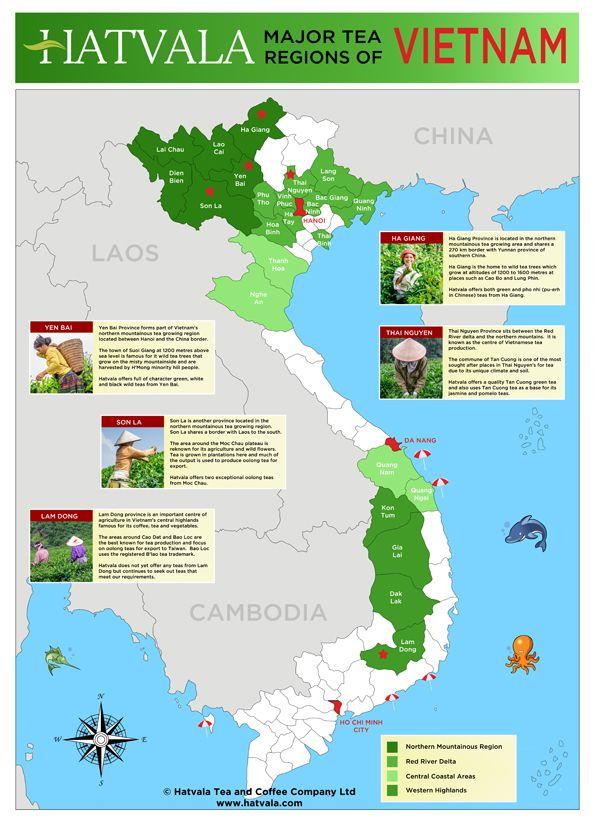 Map Showing The Major Tea Growing Regions Of Vietnam Wild