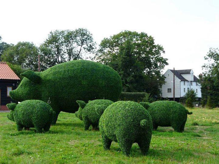 tuinvarkens van achteren!