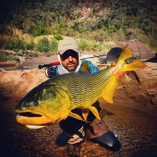 Great argentina golden dorado on the fly fly fishing for Fishing in argentina