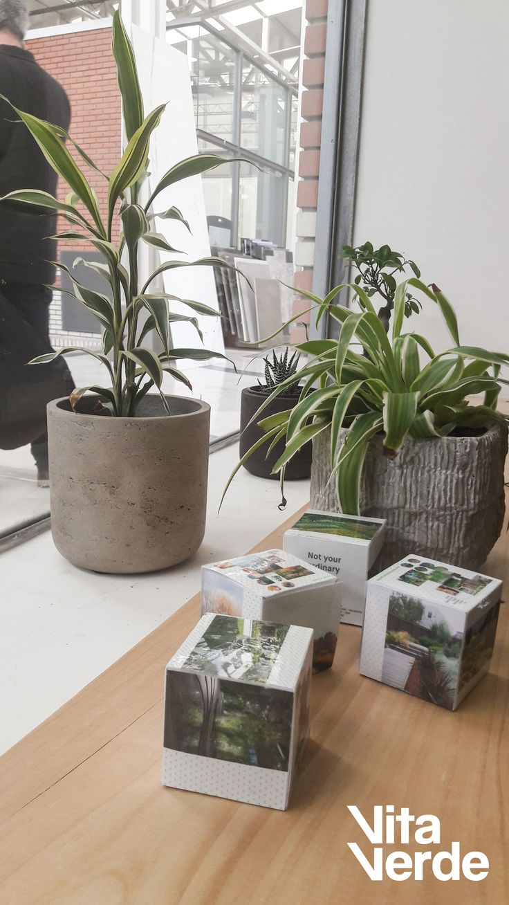 Create a happy #office environment with your favorite potted plants!   #officelife #vitaverde_gr #notyourordinaryspace