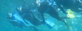 Wavelength Marine - Snorkel the Great Barrier Reef