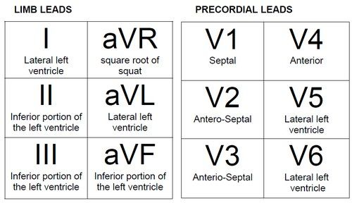 EKG Leads and Corresponding Heart Wall   Two leads that look at neighbouring anatomical areas of the heart are ...