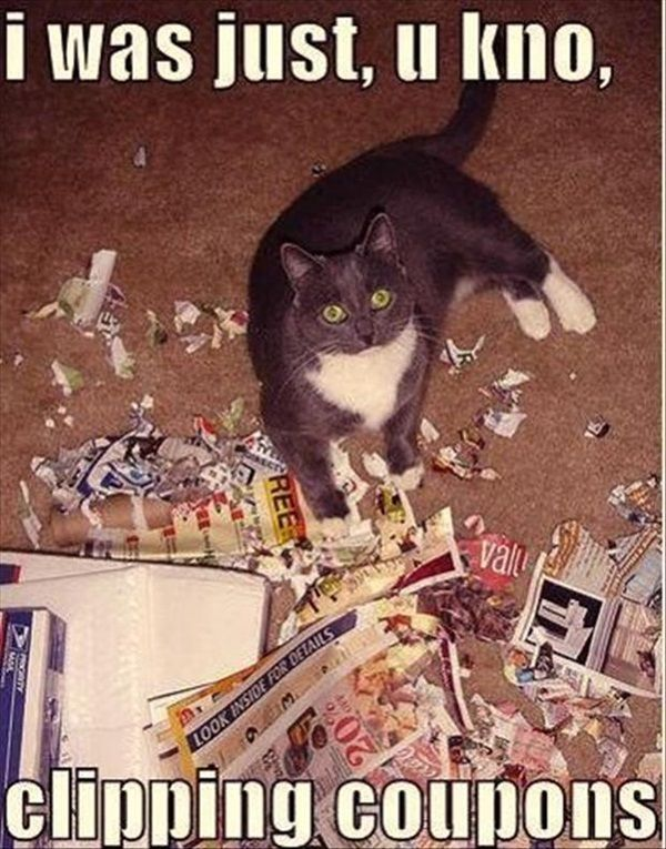 Animals Caught Red Handed Doing Unexpected Things