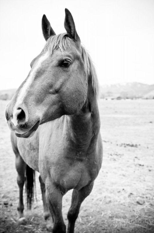 Colorado Horse Rescue, Pet photography