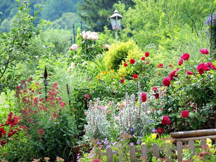 Spaziergang durch den Juni-Garten: im Juni veranstaltet mein Hanggarten ein wahres Blüten-Feuerwerk. Ganz zu schweigen von dem Duft der Rosen und Kräuter. Folgt mir in den Juni-Garten! #rosen #kräuter #herbs #roses #gartengestaltung #Juni #gartenimjuni