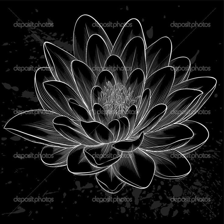 Schwarze und weiße Lotusblüte in Grafikstil isoliert lackiert - Stockilllustration: 50104275