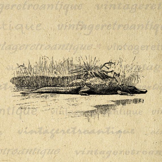 Crocodile Image Digital Printable Download Graphic Illustration Antique Clip Art. Printable digital image illustration for printing, fabric transfers, tea towels, pillows, t-shirts, tote bags, and more. Real antique clip art. Great for etsy products. This digital graphic is high quality, high resolution at 8½ x 11 inches. A Transparent background png version is included.