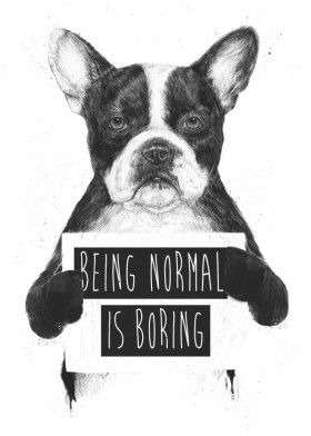 dog bulldog animal humor funny black white quote