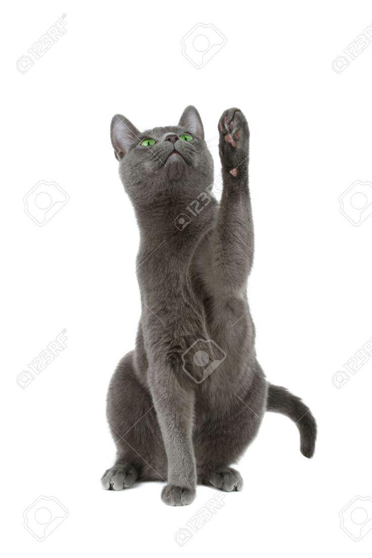 88 best cats images on Pinterest