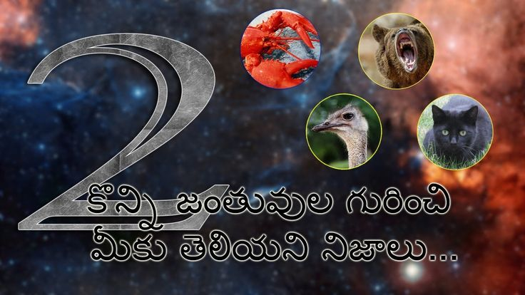 Animal facts in telugu part-1   Facts in Telugu 2nd Video