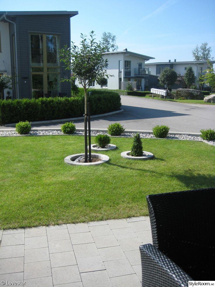 trädgård,träd,gräs,buxbom