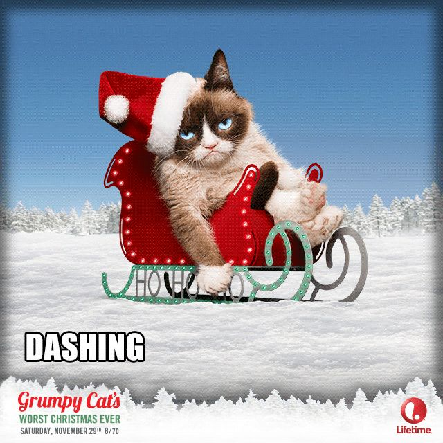 Grumpy Dashing through gifs gif funny laughter hilarious humor holiday christmas gifs cool gifs grumpy cat gifs christmas laughs