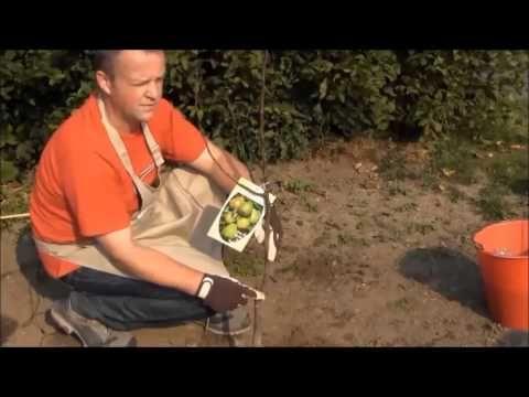 comment planter un fruitier jardinage comment watches and planters