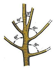 Тонкости весенней обрезки деревьев и кустарников   Дача - впрок
