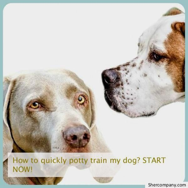 Persistent Clarified Dogs And Puppies Training Call To Action