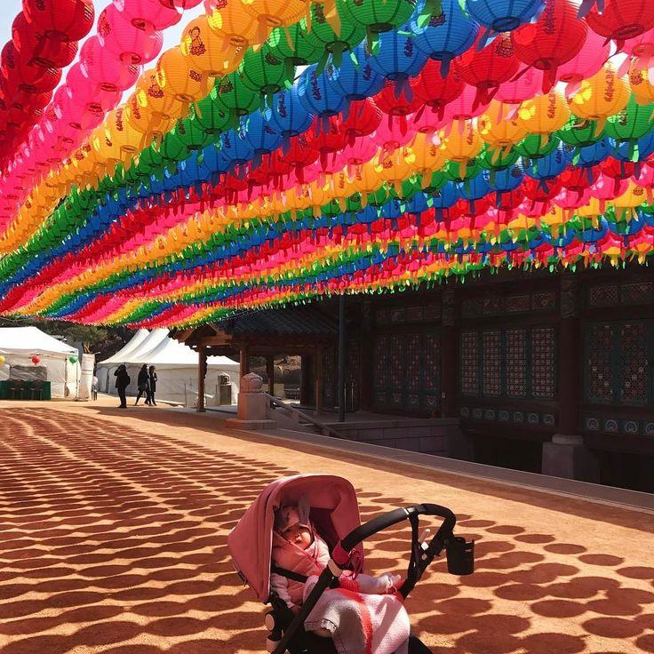 •Budda B-Day• Сегодня в Корее празднуют День Рождения Будды🙏🏻 Этот день приходится на 8 день четвертого месяца лунного календаря. И это официальный выходной для всех жителей страны. Даже несмотря на то что,всего около 20-25% корейцев буддисты.  За пару недель до праздника улицы Кореи украшают разноцветными бумажными фонариками,которые означают просветление пришедшее в мир,с учением Будды. ⠀ Это общебуддийский праздник, посвященный трем самым главным событиям жизни Будды Шакьямуни: его…
