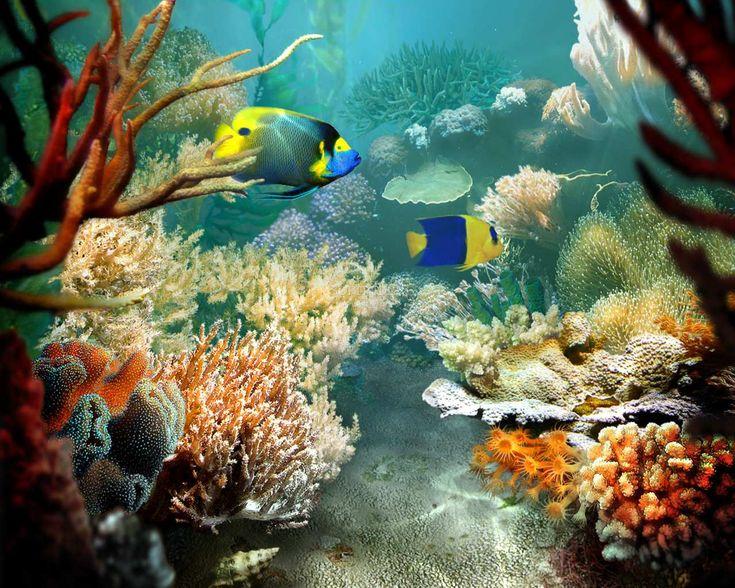 Fish | Tropical Fish Screensaver