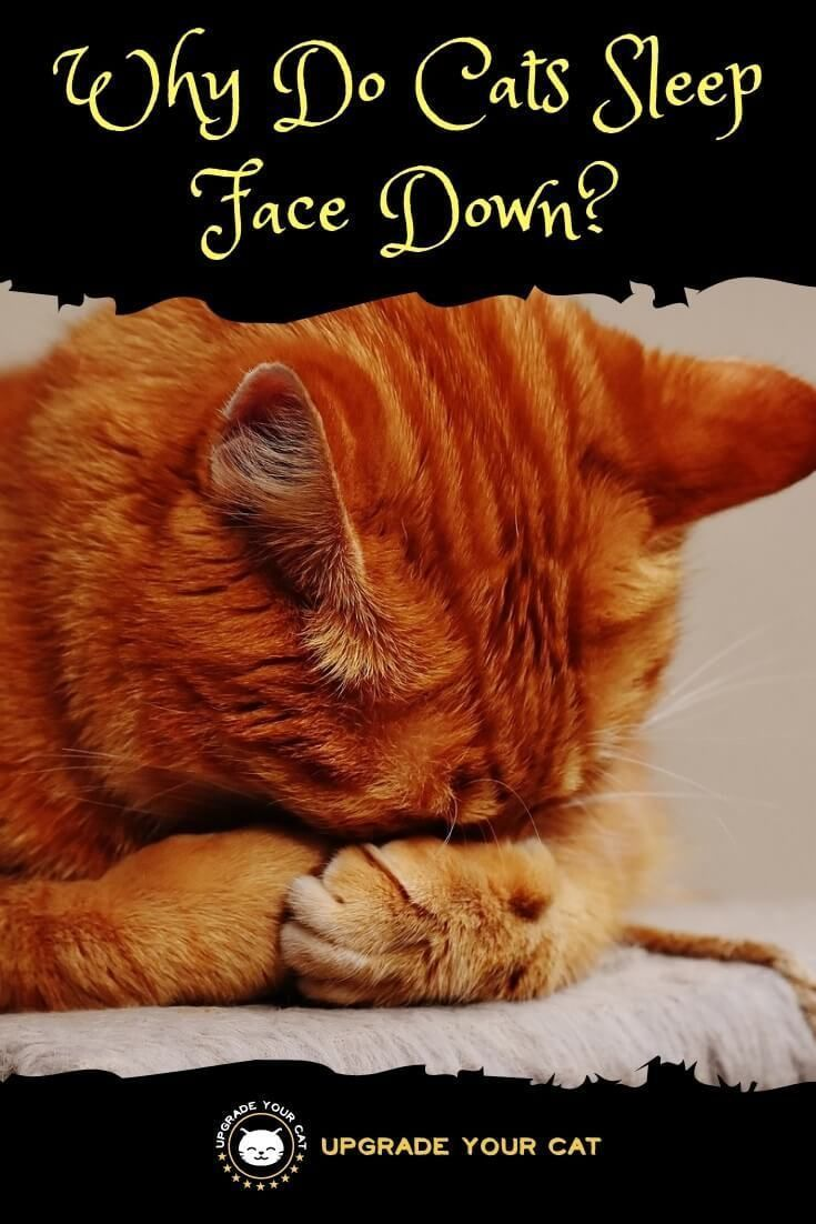 Why Do Cats Sleep Face Down It S More Than Just A Coincidence Upgrade Your Cat Cat Behavior Cat Sleeping Cat Eye Infection
