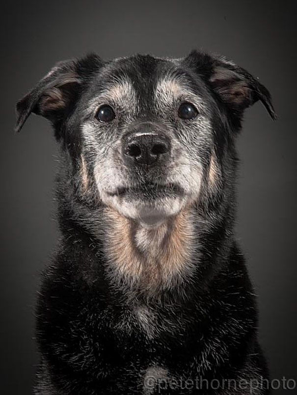 "Photographer Pete Thorne has discovered that, just as photographing the elderly can make for powerful portraits, the same can be said for old dogs as well. His ""Old Faithful"" photo series takes a warm an intimate look at man's best friends as they live out their golden years."