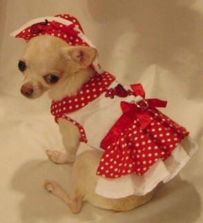 Ladybug ruffle dog dress