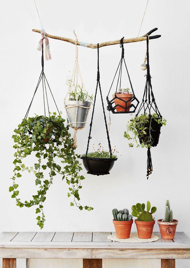 Plantes suspendues pour continuer de les accumuler même quand il n'y a plus de place sur les meubles