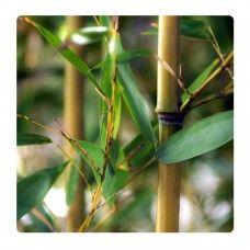 Bambusz ágak, levelek falikép