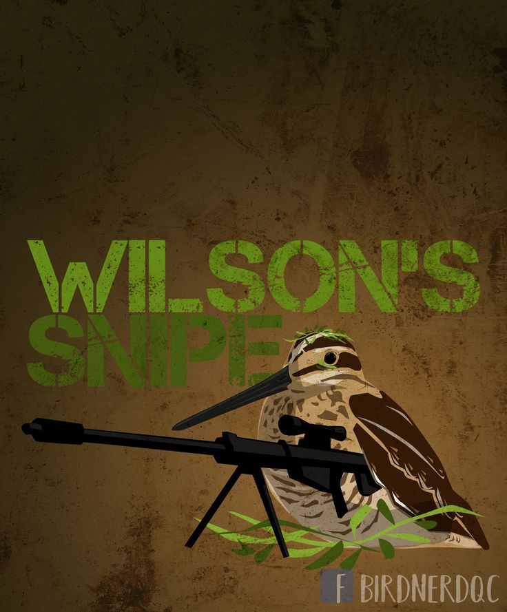 Wilson's snipe, show the Bird Nerd in you with this funny bird pun tee shirt
