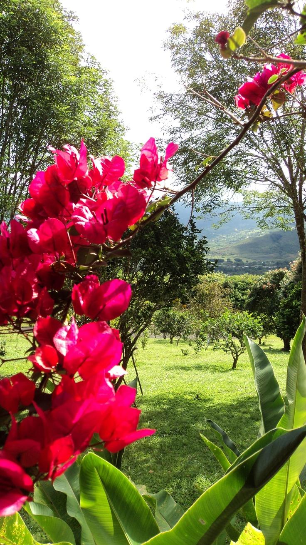 Veraneras y montañas - Valle del Cauca