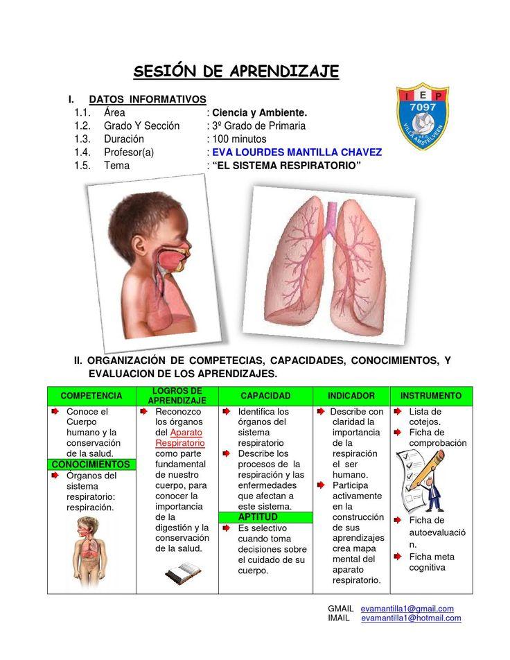 Único Mapa De Los órganos Del Cuerpo Humano Embellecimiento ...