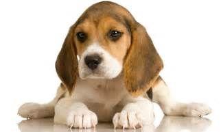 Pesquisa Como diminuir a ansiedade em cachorros. Vistas 82434.