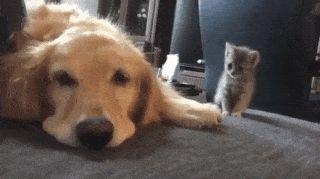 """Hey, wanna be friends?"""