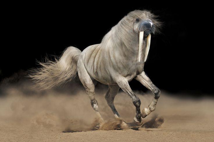The Majestic Whorse Hybrid Animal Weird Hybrid