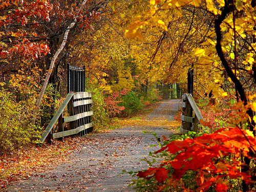 Norwottuck Rail Trail - Massachusetts Trails | AllTrails.com