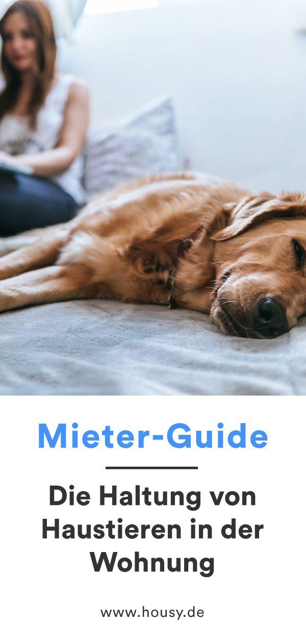 Haustiere In Der Wohnung Was Ist Erlaubt Und Worauf Solltest Du Achten Haustiere Tiere Haustier