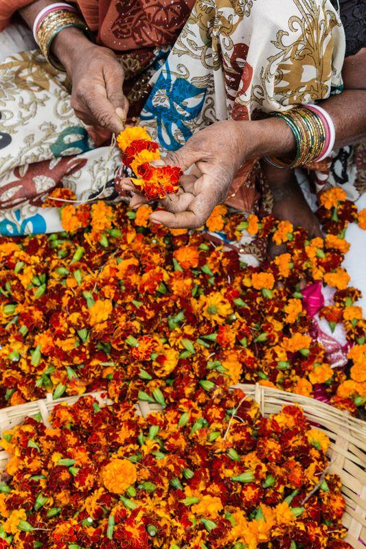 Stringing marigolds , India