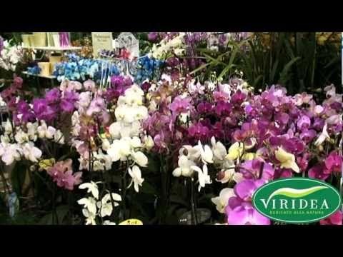 Tutti i consigli utili per prendersi cura delle affascinanti orchidee #orchidea #orchid #flower #flowers #gardening #tips