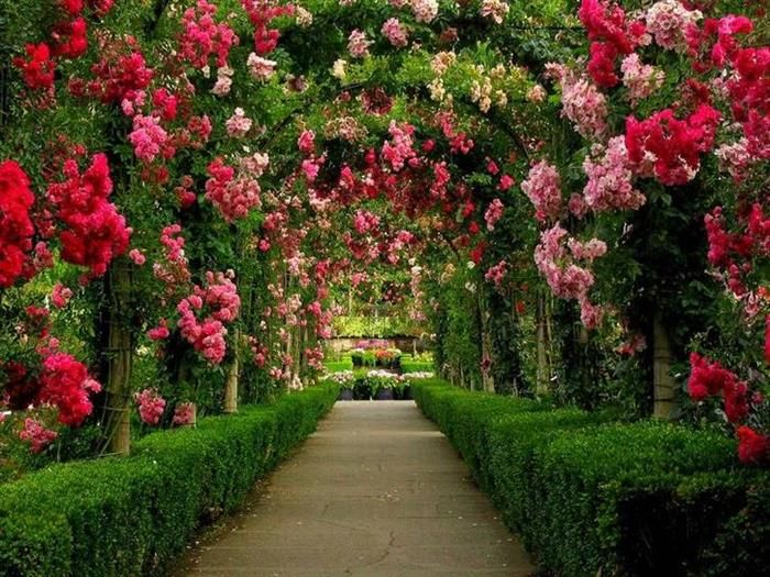 Image result for beautiful rose garden