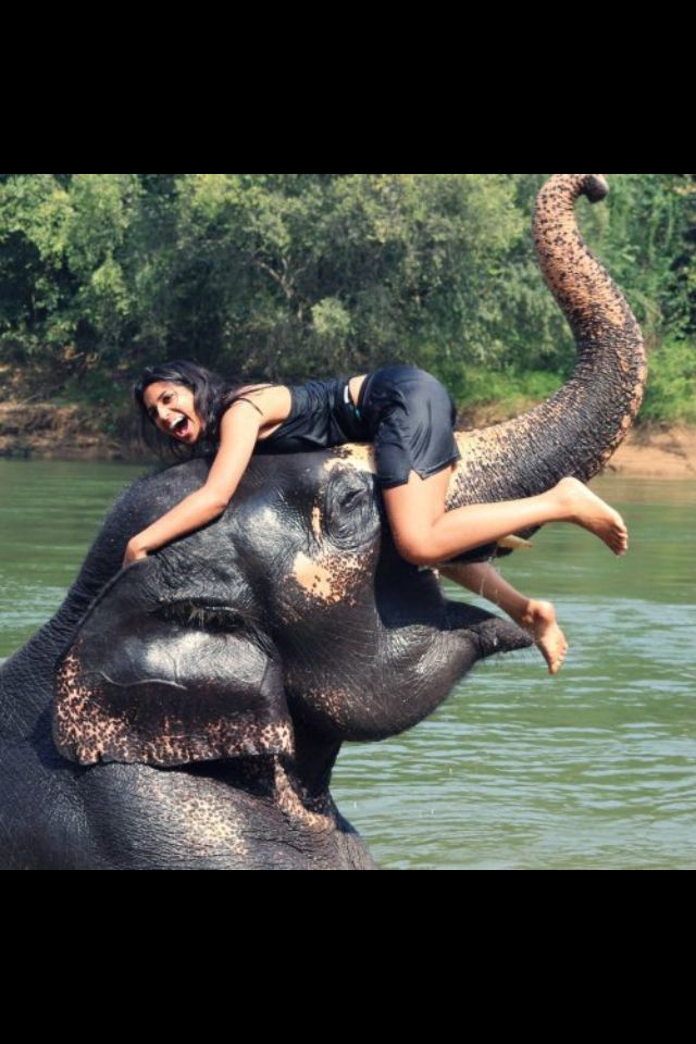 Feeling like an adventure with elephants? We offer volunteer programs in rehabilitation and conservation in either Sri Lanka or Thailand. Visit us to learn more:   http://www.vwbinternational.org