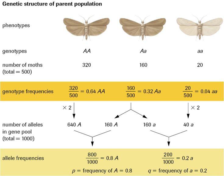 Hardy Weinberg Equation: AP Biology Crash Course https://www.albert.io/blog/hardy-weinberg-equation-ap-biology-crash-course/