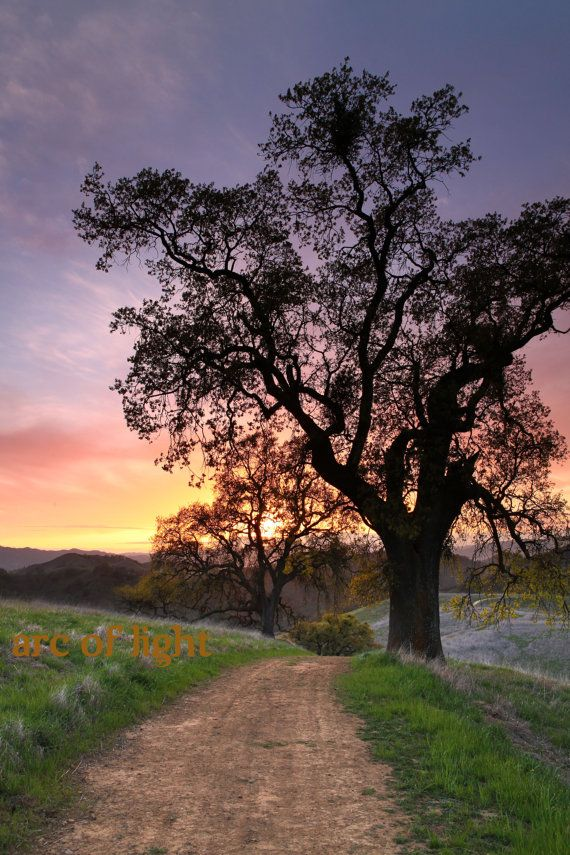Mt. Diablo, California photography. Oak tree photograph, hiking, sunset, red, orange, sky, green grass, trail 12x18