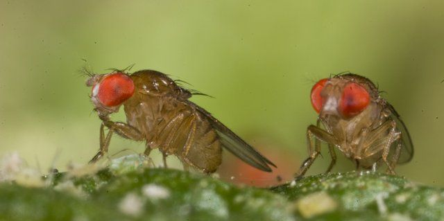 Extreme weather decides distribution of insects