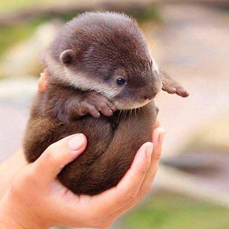 Baby Otter http://ift.tt/2tsn69h
